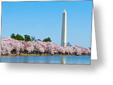 Washington Monument And Cherry Blossoms Greeting Card