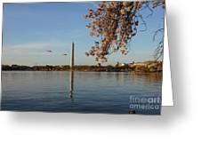 Washington Monument Greeting Card by Megan Cohen