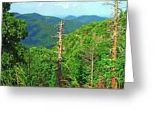 Washington National Forest,wv Greeting Card