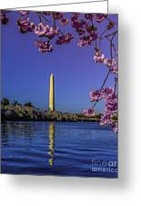 Washington Reflection And Blossoms Greeting Card