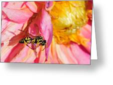 Wasp And Flower Greeting Card