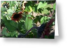 Wasp And Sunflowers Greeting Card