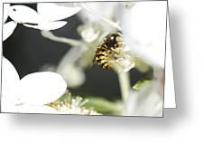 Wasp At Wotk Greeting Card
