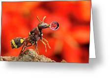 Wasp Blowing Bubble 160507c Greeting Card