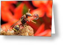 Wasp Blowing Bubble 16057b Greeting Card