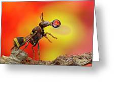 Wasp Blowing Bubble 160605d Greeting Card