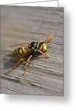 Wasp Close-up Greeting Card