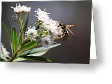 Wasp Closeup Greeting Card