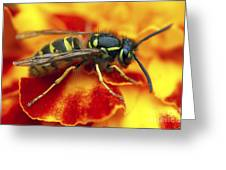 Wasp In The Bloom Greeting Card