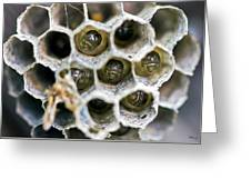 Wasp Nursery Greeting Card