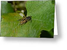 Wasp On A Sunny Day Greeting Card