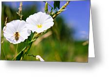 Wasp On A White Flower Greeting Card