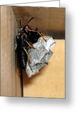 Wasp On Nest Greeting Card