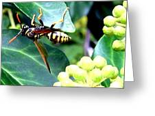Wasp On The Ivy Greeting Card