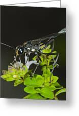 Wasp Visit Greeting Card