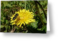 Wasp Visiting Dandelion Greeting Card