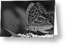 Watchful Butterfly Greeting Card