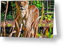Watchful Lioness Greeting Card