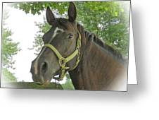 Watchful Mare Greeting Card