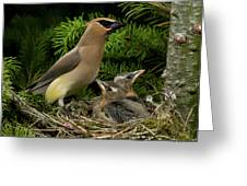 Watchful Parent Greeting Card