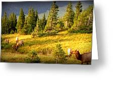 Watching Elk Iv Greeting Card