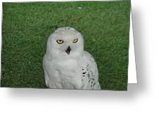 Watching Owl Greeting Card