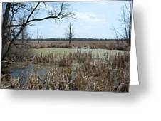 Water And Cattails Greeting Card