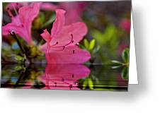 Water Azalea Greeting Card