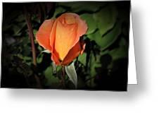 Water Beads On Orange Rose Greeting Card