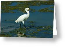Water Bird Greeting Card