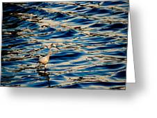 Water Bird Series 11 Greeting Card