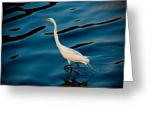 Water Bird Series 30 Greeting Card