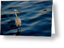 Water Bird Series 31 Greeting Card