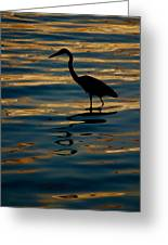 Water Bird Series 7 Greeting Card