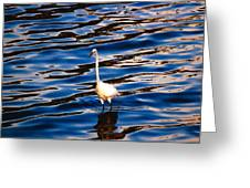 Water Bird Series 9 Greeting Card