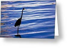 Water Bird Series Greeting Card