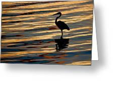 Water Birds Series 3 Greeting Card