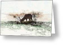 water buck in Addo Park S.A. Greeting Card