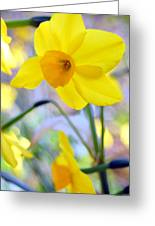 Water Color Daffodil Greeting Card