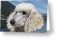 Water Dog Greeting Card