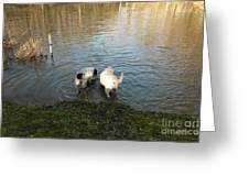 Water Dogs Greeting Card