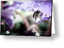Water Drop On Purple Flower Greeting Card
