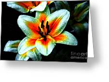 Water Droplet Covered White Lily  Greeting Card