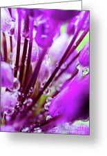Water Droplets And Purple Flower Greeting Card