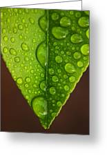 Water Droplets On Lemon Leaf Greeting Card