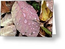 Water Drops 2 Greeting Card