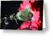 Water Drops On Carnation Greeting Card