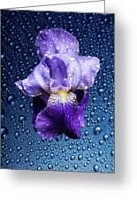Water Drops On Purple Iris Greeting Card