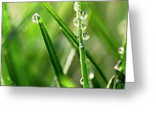 Water Drops On Spring Grass Greeting Card
