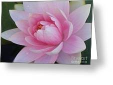 Water Drops On Water Lily Greeting Card